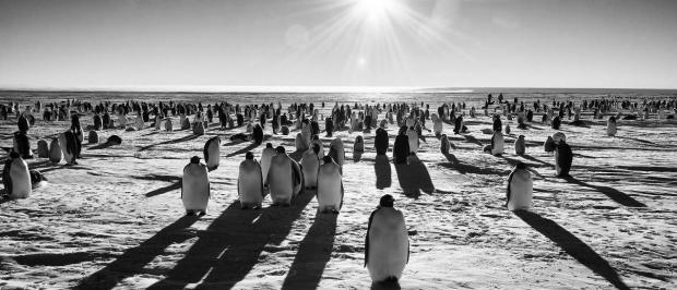 Penguin soc