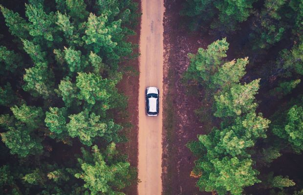 Car driving through a forest