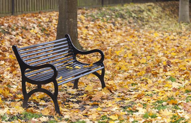 empty park bench