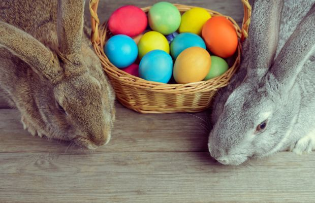 Easter bunnies with basket of multi-coloured eggs